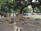 Les arbres sont giganstesques