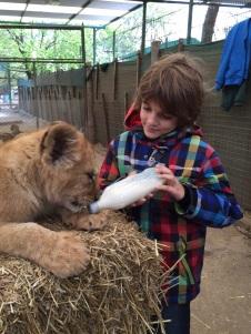 Petit biberon pour bébé lion