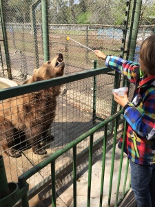 Tom dresseur d'ours