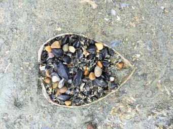 Un petit coeur de coquillage